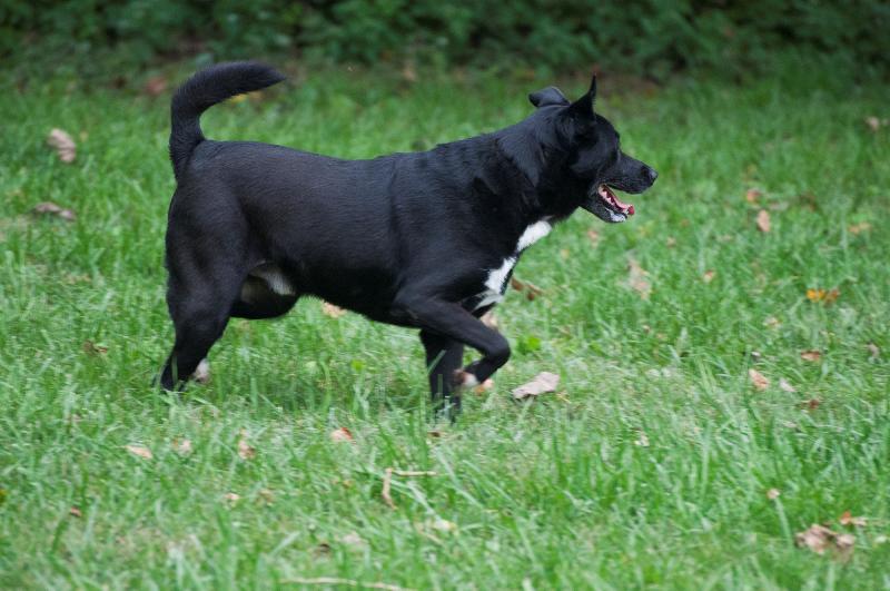 Bildertagebuch - Black Socks: echter Traumhund, der bisher viel Pech hatte! - wird über andere Orga vermittelt. 23524783mn