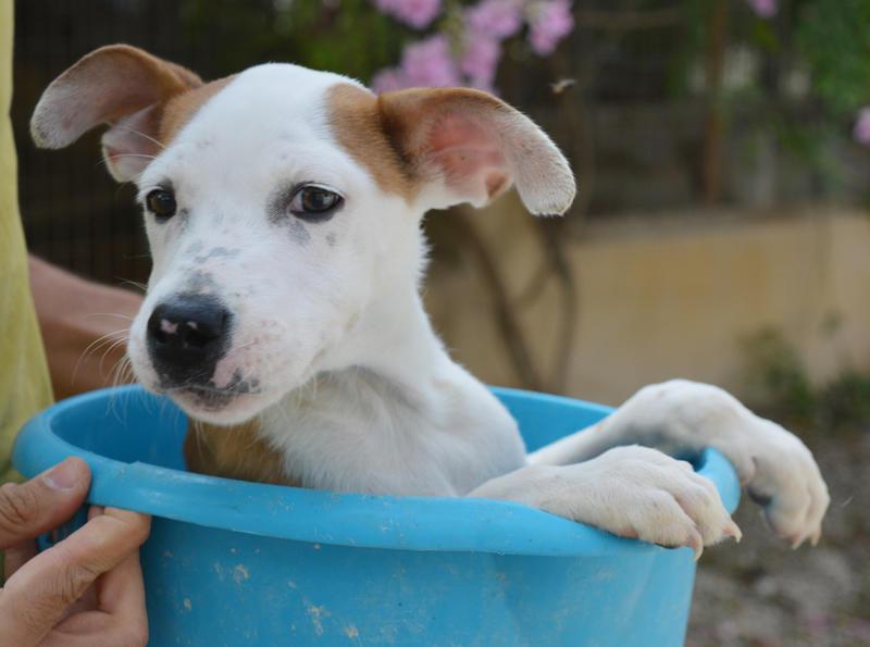 Bildertagebuch - Chico, ein schnuggeliger kleiner Kobold ... der süße Bub bringt jeden zum lachen - hat sein ZUHAUSE in SPANIEN gefunden! 23549054bi