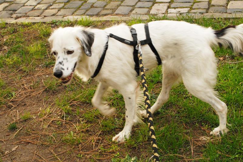 Bildertagebuch - Sissi, die Maus ist eine echte Schönheit und der perfekte Familienhund ... -- VERMITTELT -- 23556886lb