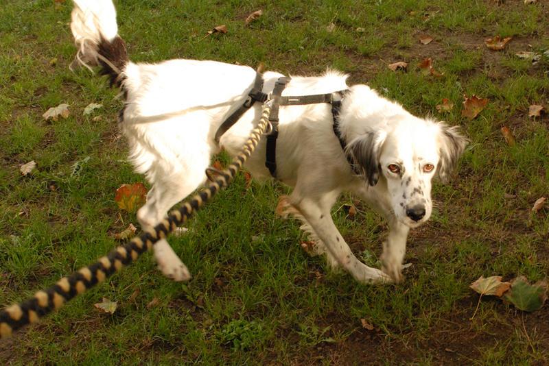 Bildertagebuch - Sissi, die Maus ist eine echte Schönheit und der perfekte Familienhund ... -- VERMITTELT -- 23556887dw