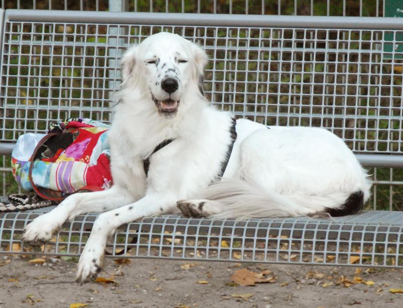 Bildertagebuch - Sissi, die Maus ist eine echte Schönheit und der perfekte Familienhund ... -- VERMITTELT -- 23556892bg