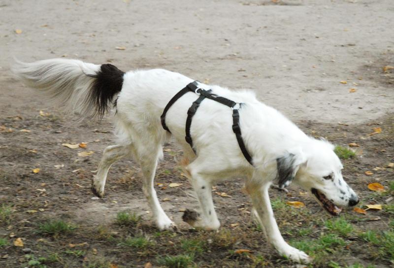 Bildertagebuch - Sissi, die Maus ist eine echte Schönheit und der perfekte Familienhund ... -- VERMITTELT -- 23556893oq