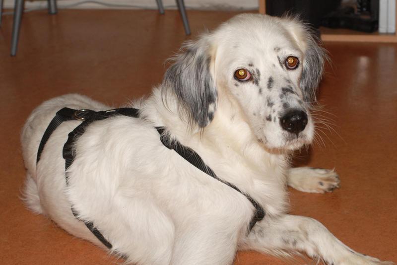 Bildertagebuch - Sissi, die Maus ist eine echte Schönheit und der perfekte Familienhund ... -- VERMITTELT -- 23556914ch