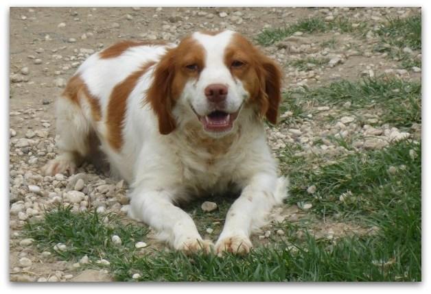 Bildertagebuch -  Polly: kleine Bretonenmaus möchte endlich rennen, Spaß haben und knuddeln - hat in ITALIEN ihr ZUHAUSE gefunden! 23644819wx