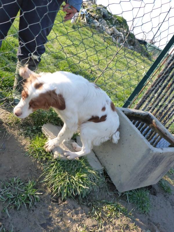 Bildertagebuch -  Polly: kleine Bretonenmaus möchte endlich rennen, Spaß haben und knuddeln - hat in ITALIEN ihr ZUHAUSE gefunden! 23644830bg