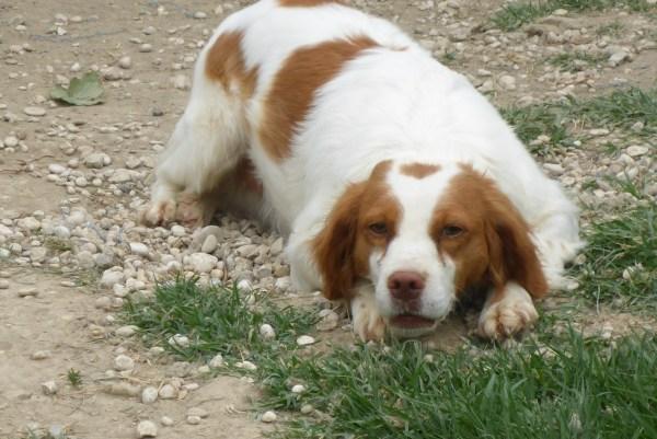 Bildertagebuch -  Polly: kleine Bretonenmaus möchte endlich rennen, Spaß haben und knuddeln - hat in ITALIEN ihr ZUHAUSE gefunden! 23644841qn