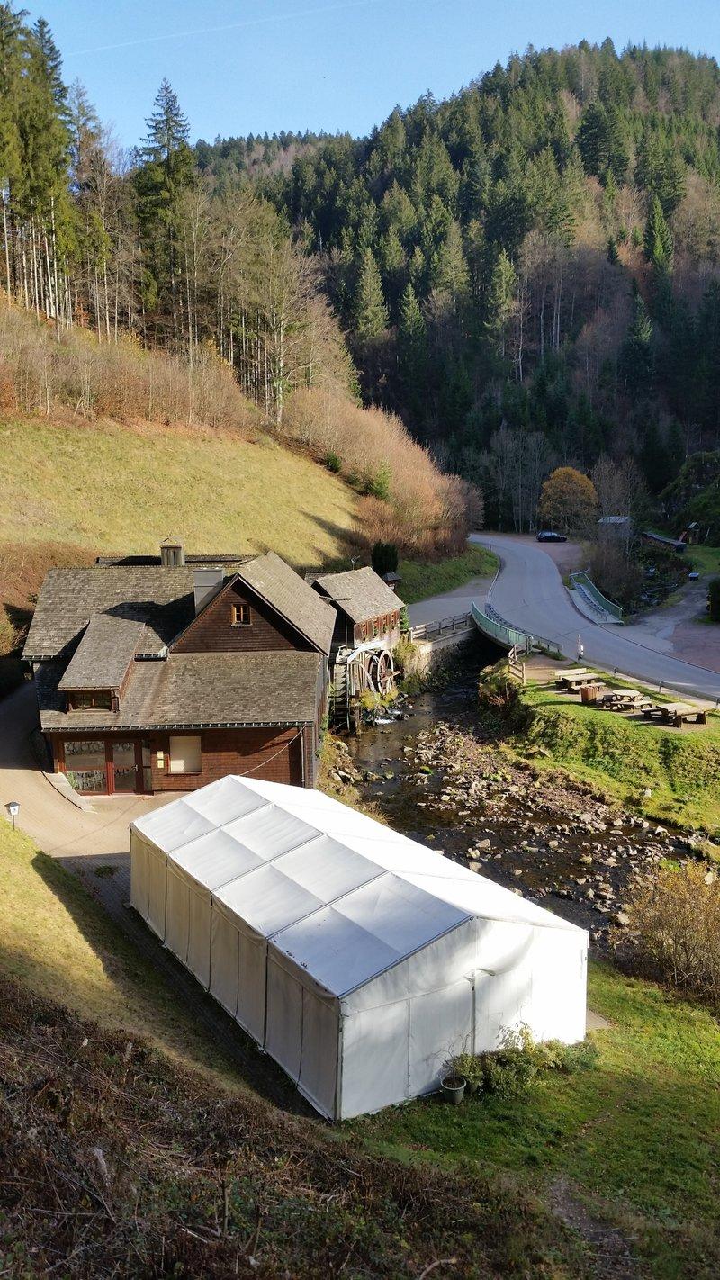 Milli im Schwarzwald 23729818cn