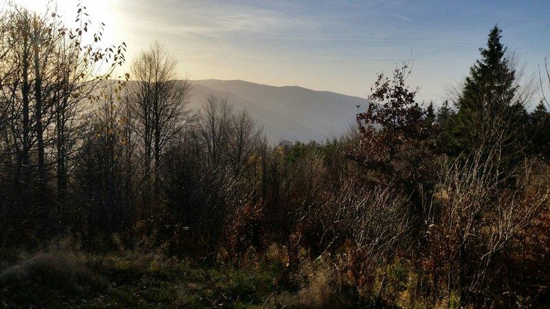 Milli im Schwarzwald 23729823nw