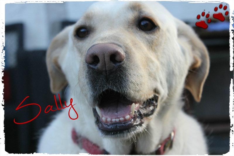 Bildertagebuch - Sally, liebe Powermaus... - sucht leider wieder... - VERMITTELT! 23926734pq