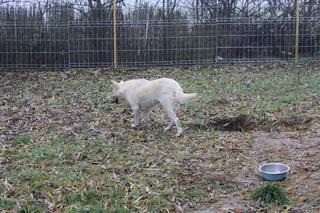 Angel lebte glücklich in Österreich RIP hübsche Maus 24080014aa