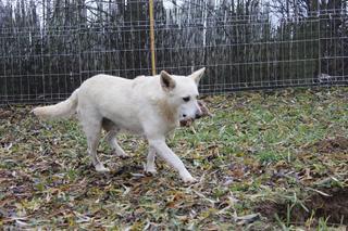 Angel lebte glücklich in Österreich RIP hübsche Maus 24080016sh