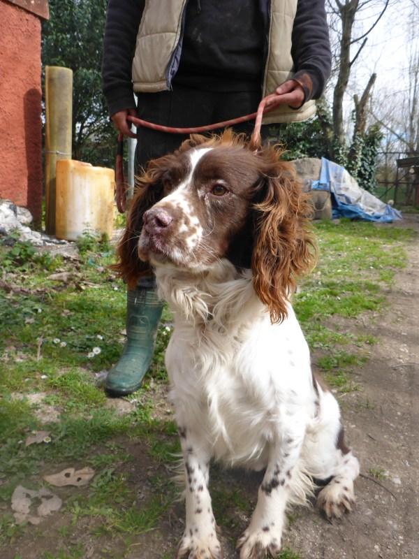 Bildertagebuch - Zak, fröhlicher toller Hundebub ... wer sucht einen tollen Kumpel? - wird über andere Orga vermittelt. 24186694sx