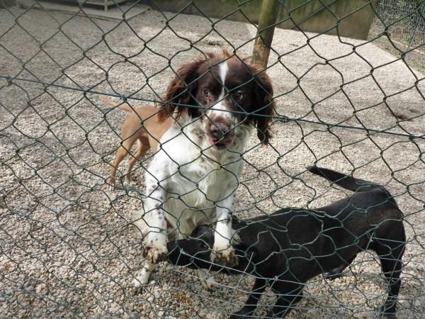 Bildertagebuch - Zak, fröhlicher toller Hundebub ... wer sucht einen tollen Kumpel? - wird über andere Orga vermittelt. 24186695bm