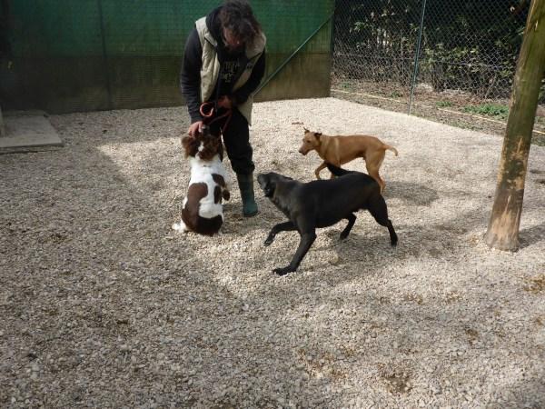 Bildertagebuch - Zak, fröhlicher toller Hundebub ... wer sucht einen tollen Kumpel? - wird über andere Orga vermittelt. 24186697dd