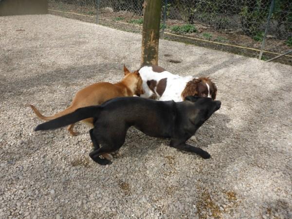 Bildertagebuch - Zak, fröhlicher toller Hundebub ... wer sucht einen tollen Kumpel? - wird über andere Orga vermittelt. 24186700db
