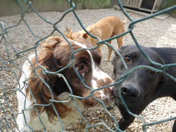 Bildertagebuch - Zak, fröhlicher toller Hundebub ... wer sucht einen tollen Kumpel? - wird über andere Orga vermittelt. 24186739mj