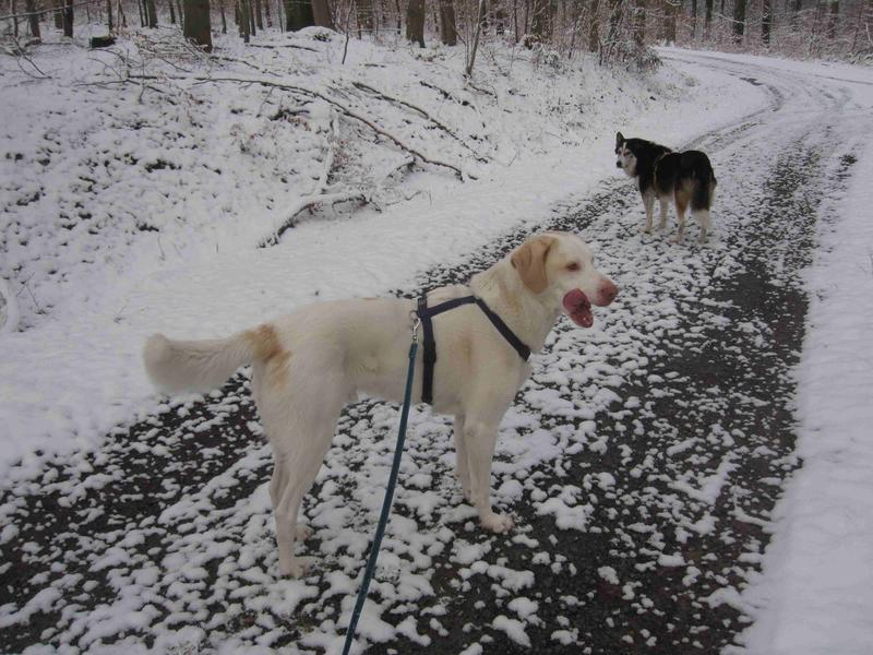 Bildertagebuch - EWALD (nun Jonne), besonderer Hund sucht besondere Menschen...VERMITTELT! 24301739xn