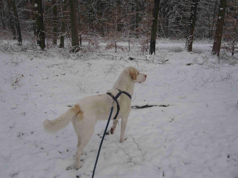 Bildertagebuch - EWALD (nun Jonne), besonderer Hund sucht besondere Menschen...VERMITTELT! 24301740pt
