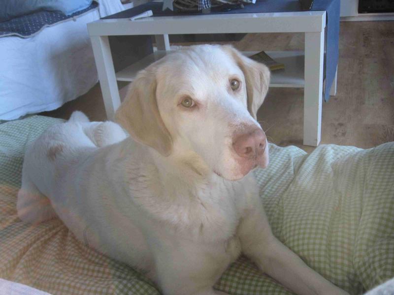 Bildertagebuch - EWALD (nun Jonne), besonderer Hund sucht besondere Menschen...VERMITTELT! 24301743eo