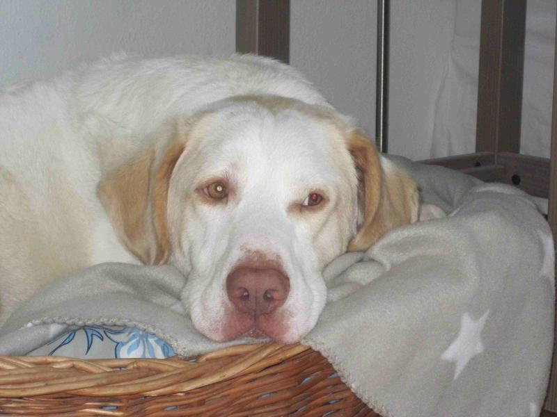 Bildertagebuch - EWALD (nun Jonne), besonderer Hund sucht besondere Menschen...VERMITTELT! 24301745uh