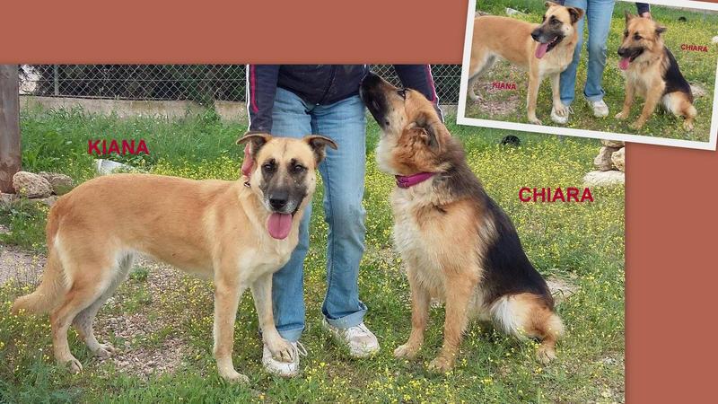 Bildertagebuch - Kiana, wunderschöne freundliche Hundedame ... eine Freundin fürs Leben - VERMITTELT! 24397870ke