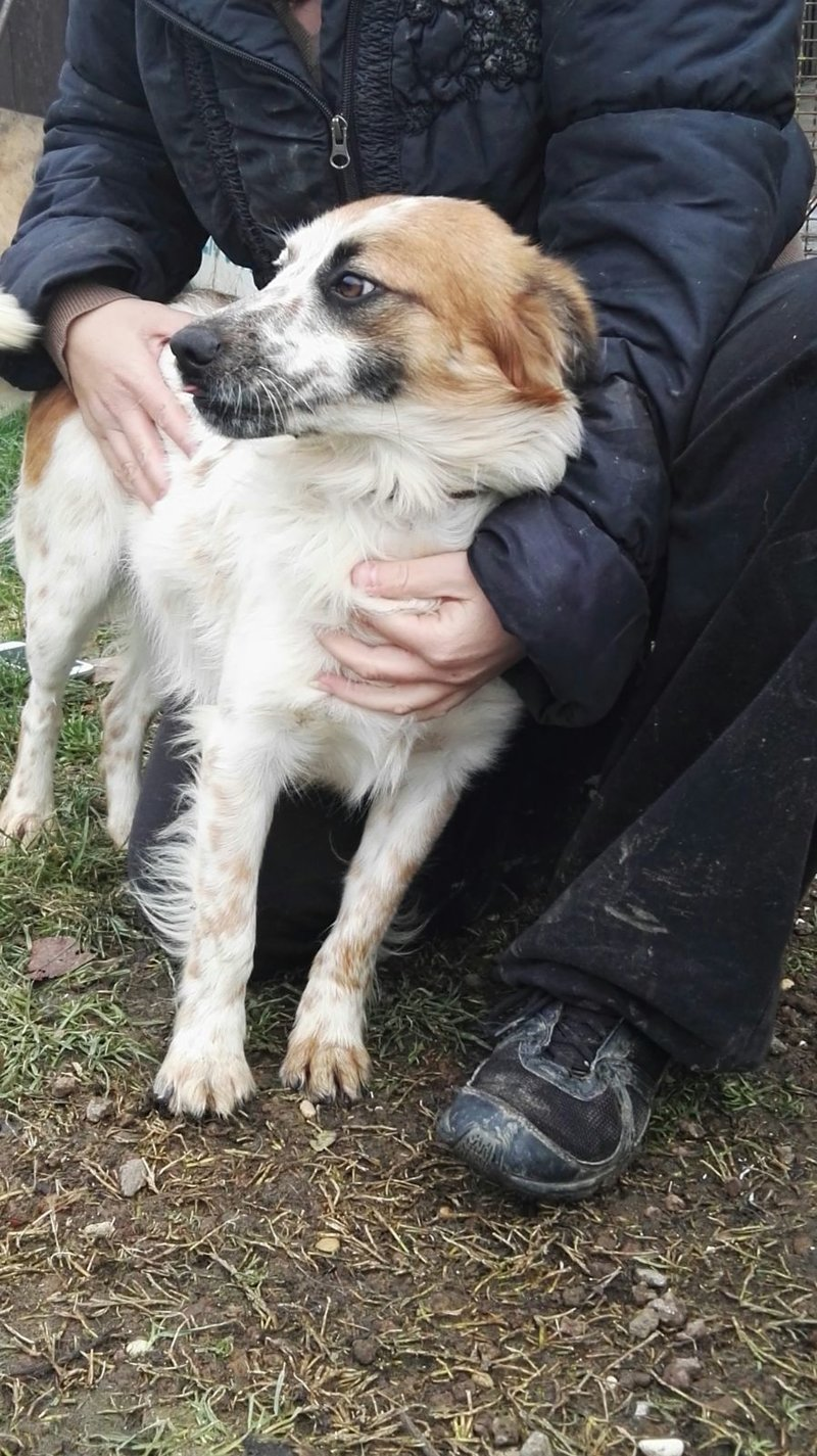 Bildertagebuch -  Loriot, ein wunderbarer Hund sucht ein schönes Zuhause, bei lieben Menschen- hat über andere Orga ZUHAUSE GEFUNDEN!!! 24398521ok