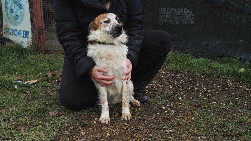 Bildertagebuch -  Loriot, ein wunderbarer Hund sucht ein schönes Zuhause, bei lieben Menschen- hat über andere Orga ZUHAUSE GEFUNDEN!!! 24398525ij