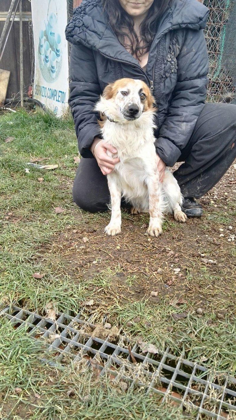 Bildertagebuch -  Loriot, ein wunderbarer Hund sucht ein schönes Zuhause, bei lieben Menschen- hat über andere Orga ZUHAUSE GEFUNDEN!!! 24398526nq