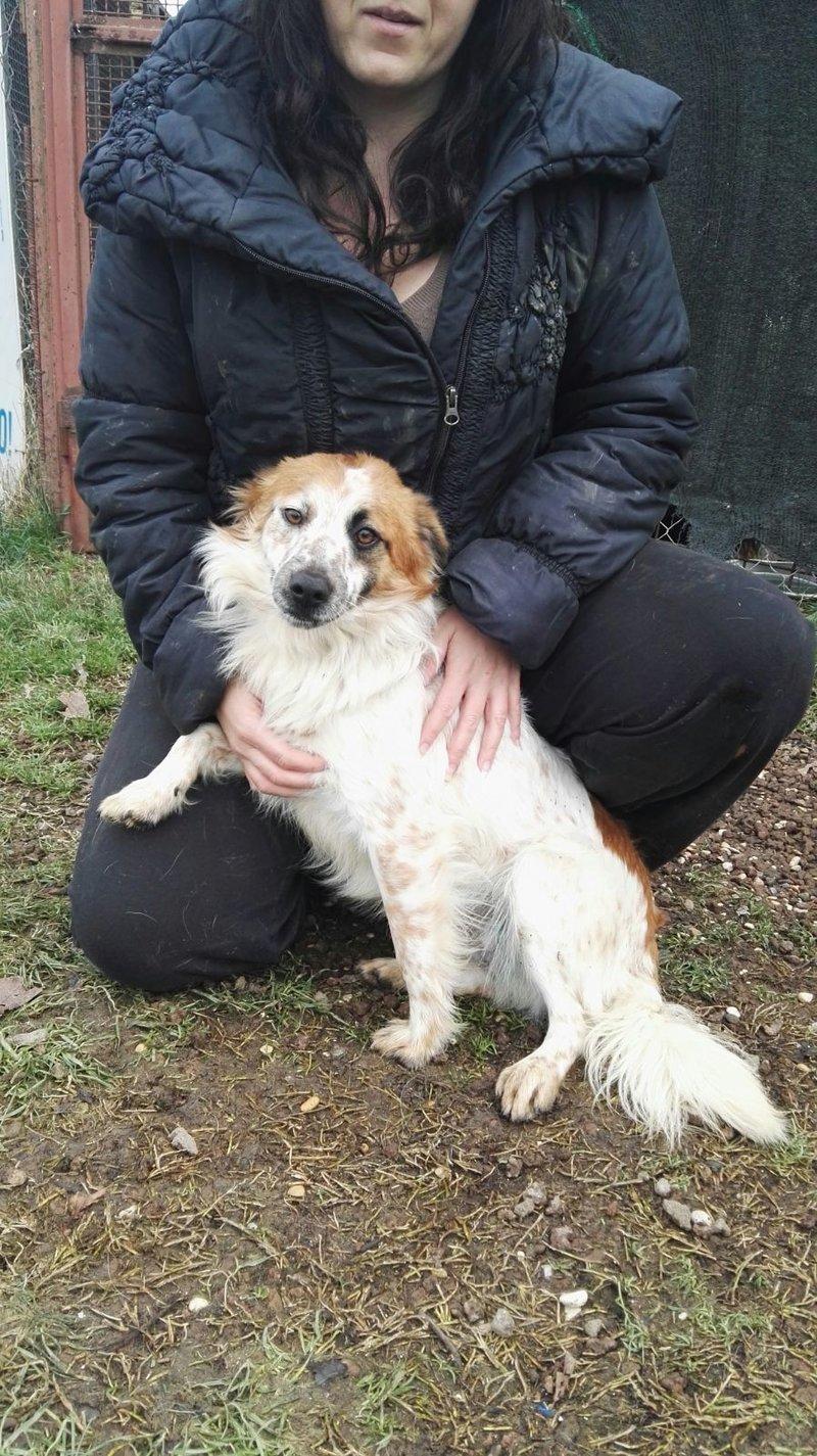Bildertagebuch -  Loriot, ein wunderbarer Hund sucht ein schönes Zuhause, bei lieben Menschen- hat über andere Orga ZUHAUSE GEFUNDEN!!! 24398529hk