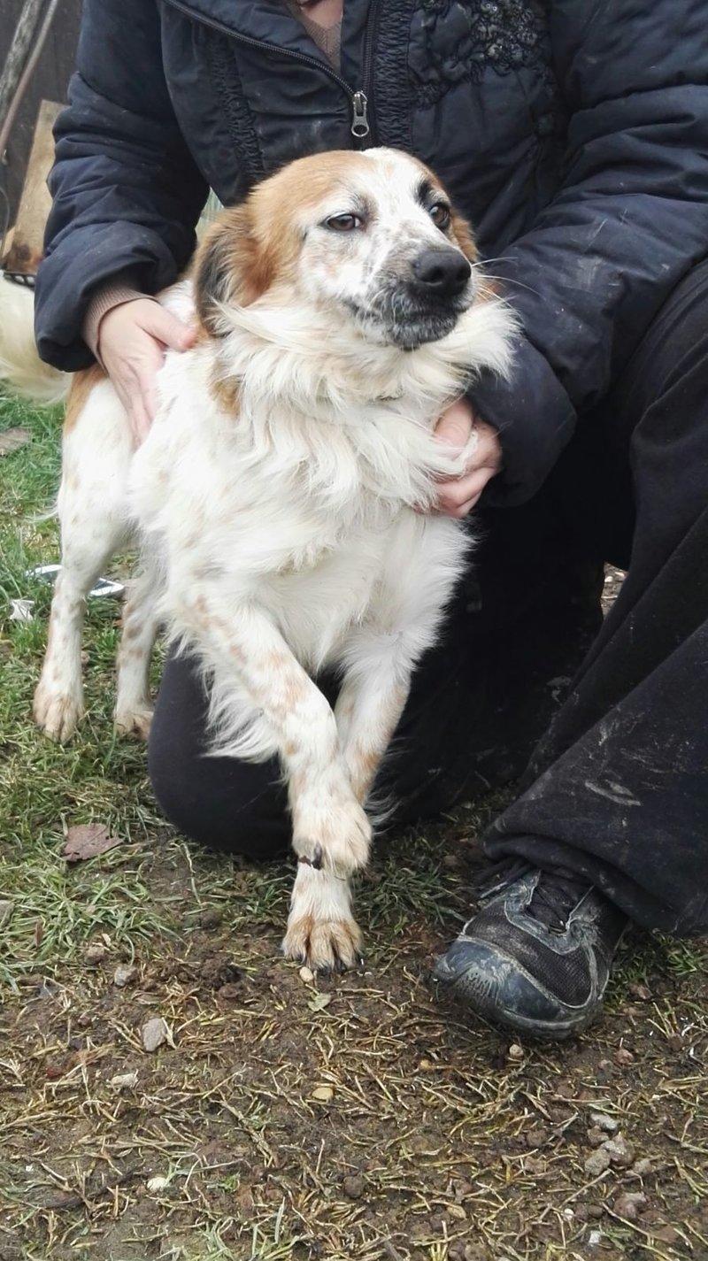 Bildertagebuch -  Loriot, ein wunderbarer Hund sucht ein schönes Zuhause, bei lieben Menschen- hat über andere Orga ZUHAUSE GEFUNDEN!!! 24398530ub
