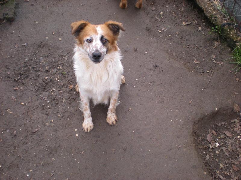 Bildertagebuch -  Loriot, ein wunderbarer Hund sucht ein schönes Zuhause, bei lieben Menschen- hat über andere Orga ZUHAUSE GEFUNDEN!!! 24410905zy