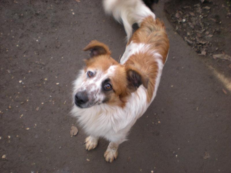 Bildertagebuch -  Loriot, ein wunderbarer Hund sucht ein schönes Zuhause, bei lieben Menschen- hat über andere Orga ZUHAUSE GEFUNDEN!!! 24410906um
