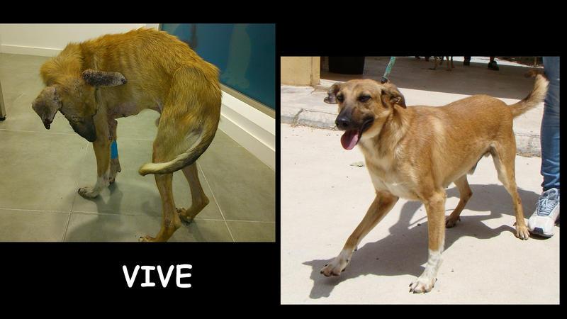 Bildertagebuch - VIVE, ein traumhafter Bub war in einem erbärmlichen Zustand... Wer hat ein Herz für diesen großen Kämpfer? 24432860iq