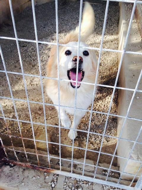 Bildertagebuch -  Bianco: grausam misshandelt sucht Hundeprofis denen er vertrauen kann - VERMITTELT - 24475613vw