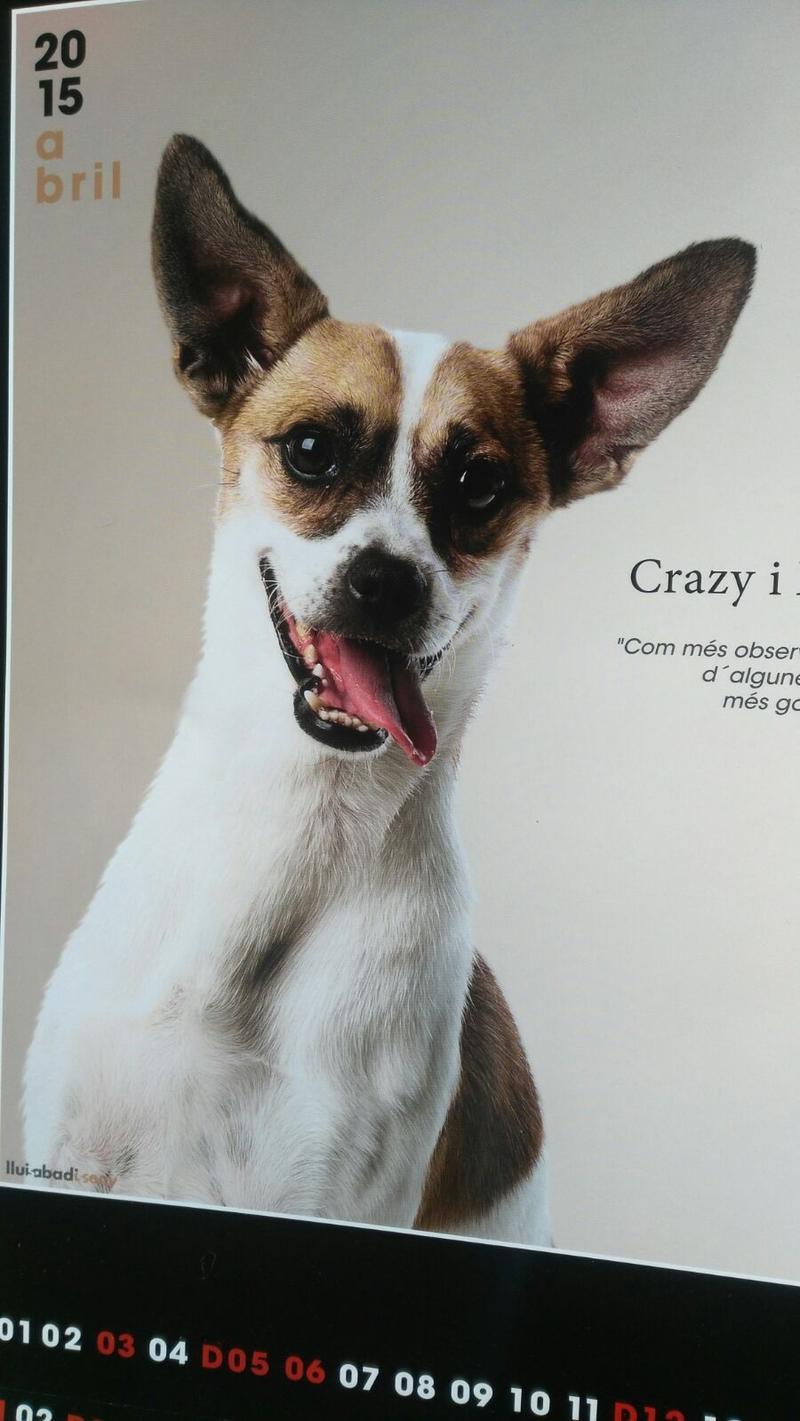 Bildertagebuch - Crazy, schnuggelige kleine wilde Hummel ... Wer möchte dem Bub endlich seine zweite Chance geben?  in Spanien ZUHAUSE GEFUNDEN! 24540316xh