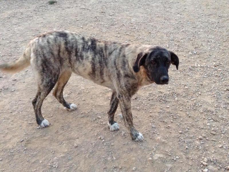 Bildertagebuch - Timber, ein ganz süßes Hundemädchen kommt aus ihrem Schneckenhaus raus und fängt an ihr Leben zu genießen ...ZUHAUSE IN SPANIEN GEFUNDEN! 24560769zg