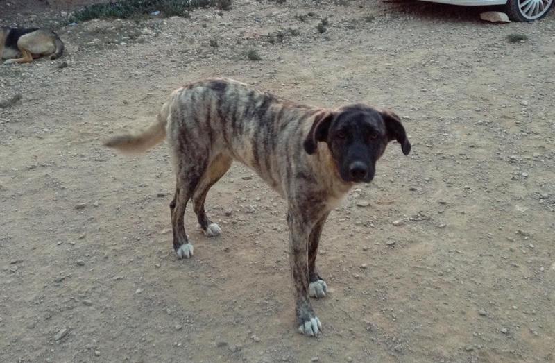 Bildertagebuch - Timber, ein ganz süßes Hundemädchen kommt aus ihrem Schneckenhaus raus und fängt an ihr Leben zu genießen ...ZUHAUSE IN SPANIEN GEFUNDEN! 24560771jv