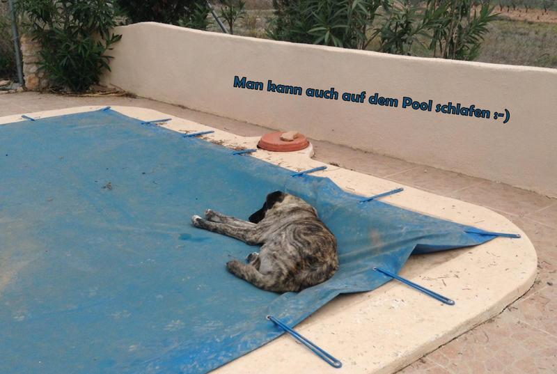 Bildertagebuch - Timber, ein ganz süßes Hundemädchen kommt aus ihrem Schneckenhaus raus und fängt an ihr Leben zu genießen ...ZUHAUSE IN SPANIEN GEFUNDEN! 24560772zi
