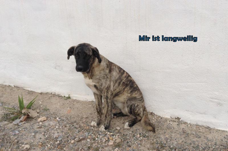 Bildertagebuch - Timber, ein ganz süßes Hundemädchen kommt aus ihrem Schneckenhaus raus und fängt an ihr Leben zu genießen ...ZUHAUSE IN SPANIEN GEFUNDEN! 24560773ch