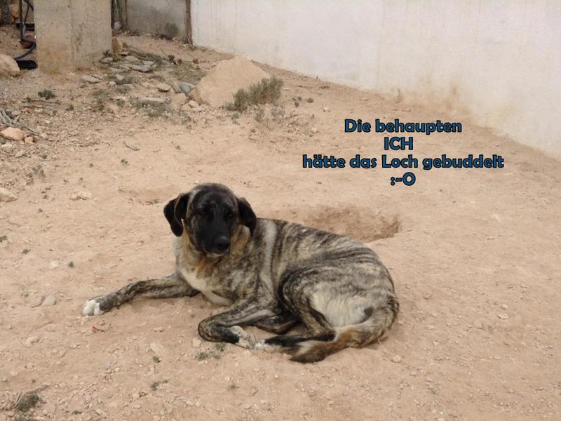 Bildertagebuch - Timber, ein ganz süßes Hundemädchen kommt aus ihrem Schneckenhaus raus und fängt an ihr Leben zu genießen ...ZUHAUSE IN SPANIEN GEFUNDEN! 24560774jj