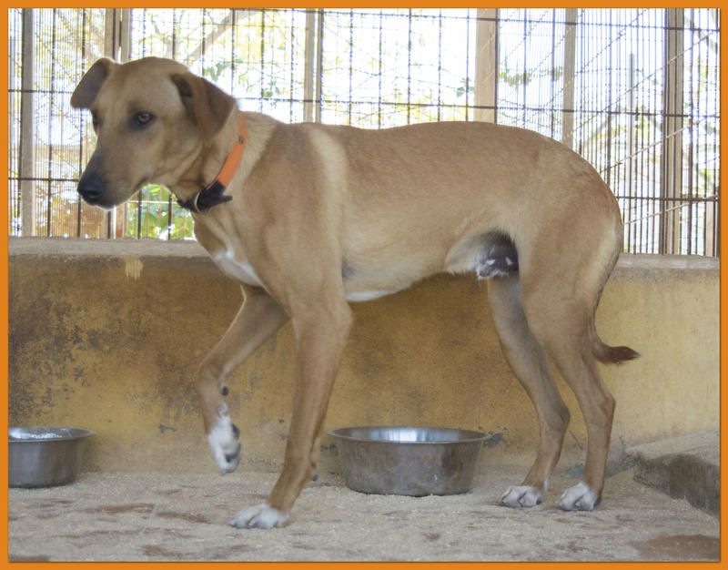 Bildertagebuch - Nugget, ein ganz süßer Hundejunge konnte gerade noch rechtzeitig vorm Ertrinken gerettet werden! - VERMITTELT! 24615385vx
