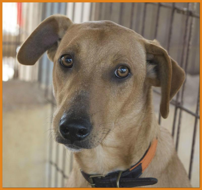 Bildertagebuch - Nugget, ein ganz süßer Hundejunge konnte gerade noch rechtzeitig vorm Ertrinken gerettet werden! - VERMITTELT! 24615388zz