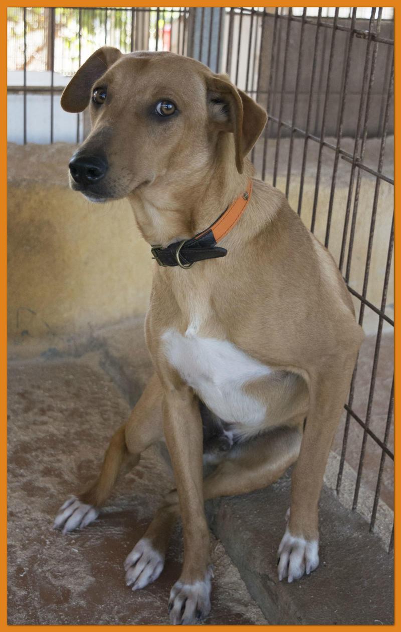 Bildertagebuch - Nugget, ein ganz süßer Hundejunge konnte gerade noch rechtzeitig vorm Ertrinken gerettet werden! - VERMITTELT! 24615389kw