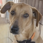 Bildertagebuch - Nugget, ein ganz süßer Hundejunge konnte gerade noch rechtzeitig vorm Ertrinken gerettet werden! - VERMITTELT! 24615391gi