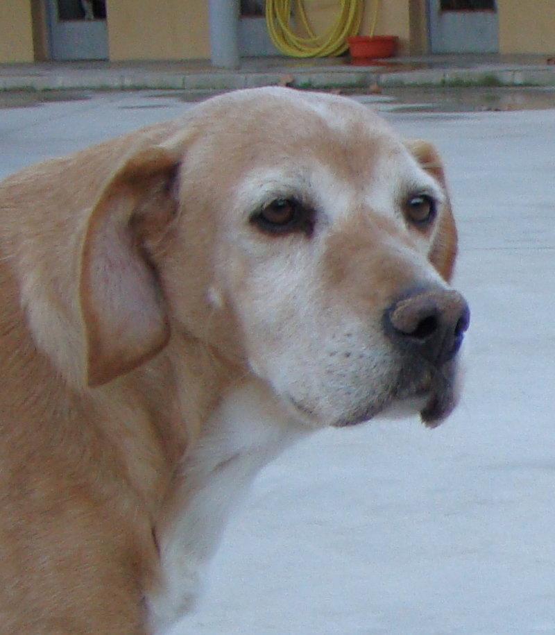 Bildertagebuch -  Luca: liebe, nette, sehr verträgliche Hundedame sitzt seit Jahren im Shelter und wird immer übersehen! in Spanien ein ZUHAUSE GEFUNDEN! 24626458xm