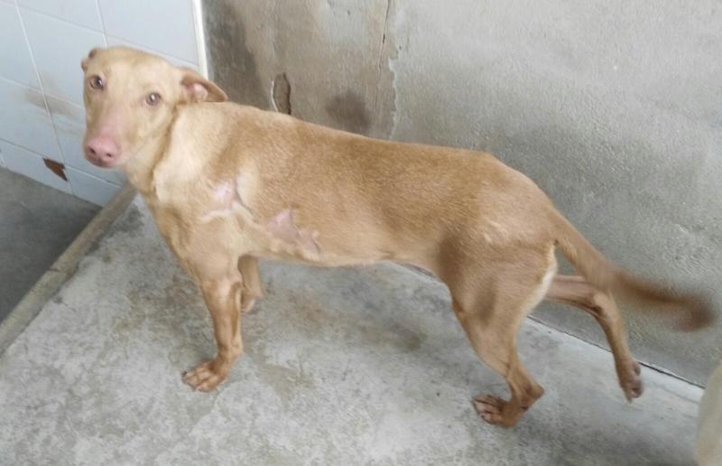 Bildertagebuch - Odi, eine ganz süße arme Maus wurde in einem grauenhaften Zustand gefunden mit schweren Verletzungen! in Spanien ZUHAUSE GEFUNDEN! 24640481pf