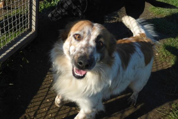 Bildertagebuch -  Loriot, ein wunderbarer Hund sucht ein schönes Zuhause, bei lieben Menschen- hat über andere Orga ZUHAUSE GEFUNDEN!!! 24675520xw