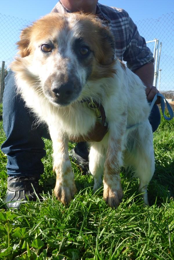 Bildertagebuch -  Loriot, ein wunderbarer Hund sucht ein schönes Zuhause, bei lieben Menschen- hat über andere Orga ZUHAUSE GEFUNDEN!!! 24675526yx
