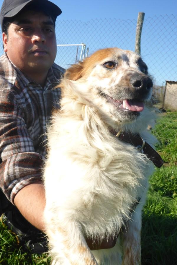 Bildertagebuch -  Loriot, ein wunderbarer Hund sucht ein schönes Zuhause, bei lieben Menschen- hat über andere Orga ZUHAUSE GEFUNDEN!!! 24675527ka