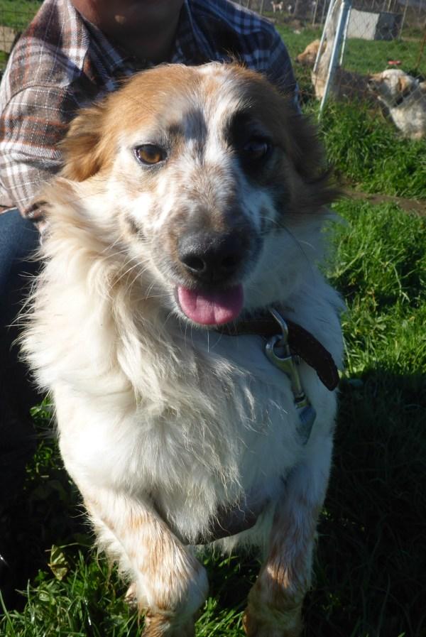 Bildertagebuch -  Loriot, ein wunderbarer Hund sucht ein schönes Zuhause, bei lieben Menschen- hat über andere Orga ZUHAUSE GEFUNDEN!!! 24675528ro